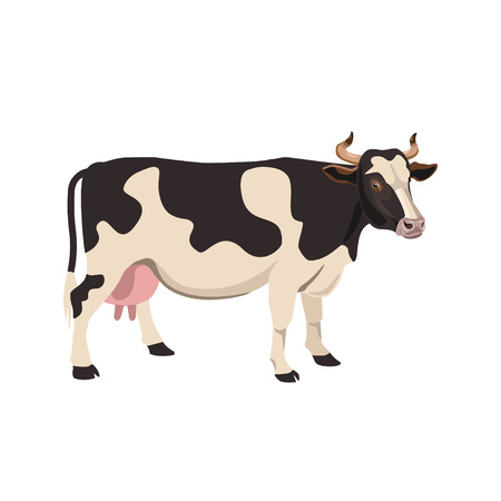 Black and white spotted cow. Vector illustration on the white background
