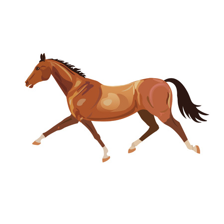 Beautiful bay horse running trot. Vector illustration