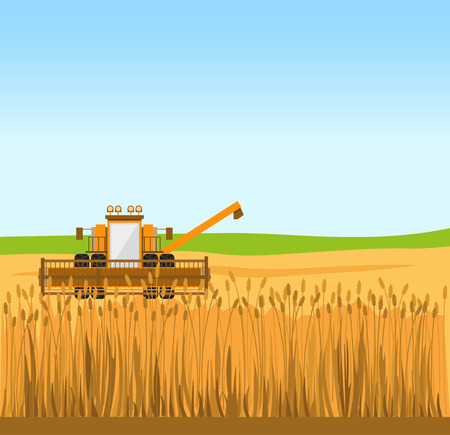Grain harvester combine work in wheat field. Vector illustration Illustration