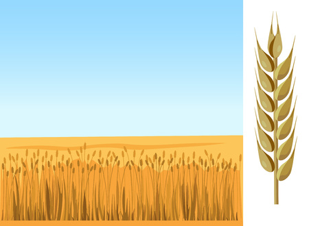 Wheat field and blue sky. Vector illustration Illustration