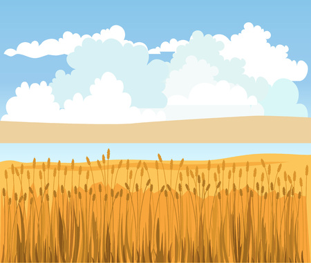 Rural landscape with wheat field. Vector illustration
