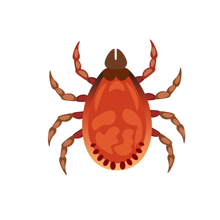 Vector illustration of tick. Mite isolated on white background.
