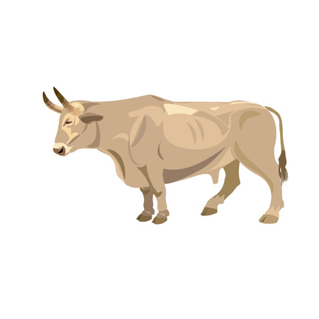 Standing white ox. Side view. Vector illustration.