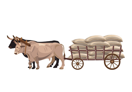 Pair of oxen pull a cart with sacks