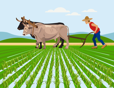 Farmer plowing paddy field with pair oxen. Vector illustration