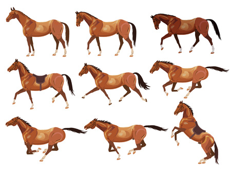 Collection of vector illustrations with horses. Standing, walking, trotting, galloping, rearing horses.
