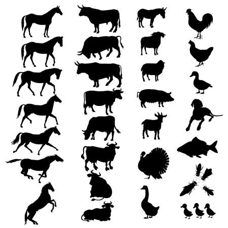 백인에 고립 된 벡터 농장 동물 실루엣의 집합입니다.