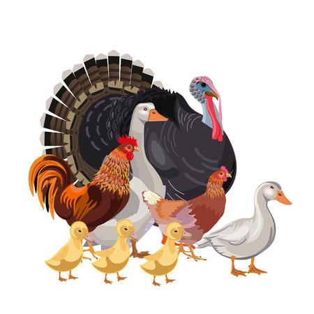 Set of farm birds. Vector illustration