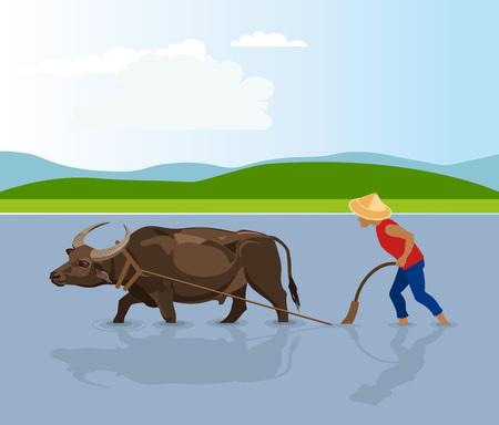Water buffalo ploughing rice fields