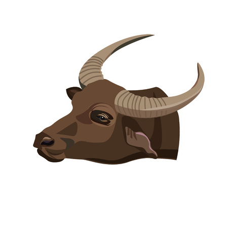 Water buffalo head. Vector illustration on the white