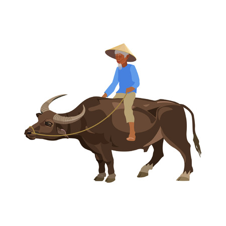 Old man riding water buffalo. Vector illustration on the white