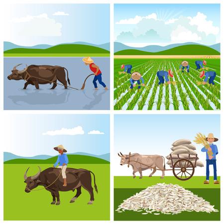 Een boeren werken in rijstvelden. .illustraties voor infographics Stock Illustratie