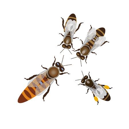 Werkbijen en bijenkoningin. Vector illustratie