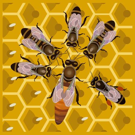 蜂の巣の女王蜂と働き蜂
