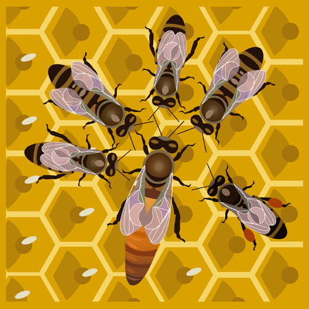 Worker bees with the queen bee on honeycomb Illustration