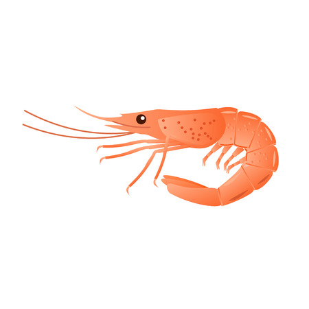 Boiled shrimp isolated on white. Vector illustration Illustration