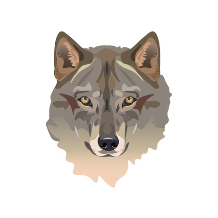 Head of gray wolf. Vector illustration
