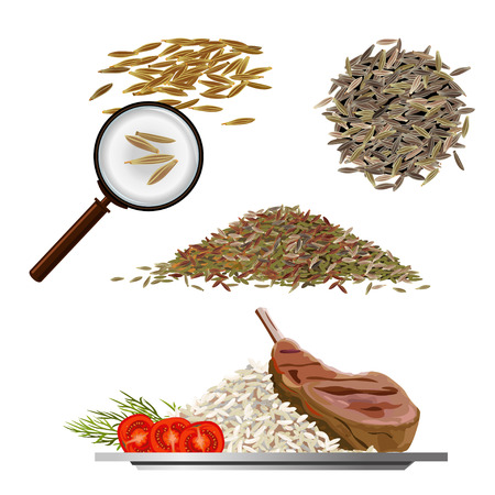 Set of vector illustrations with cumin