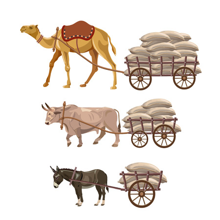 Set of vector vehicles with draft animals: camel, ox and donkey Illustration