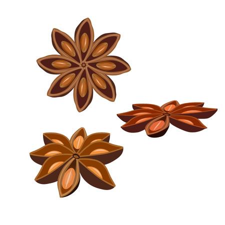 Frutti dell'anice stellato isolati su sfondo bianco. Illustrazione vettoriale Vettoriali