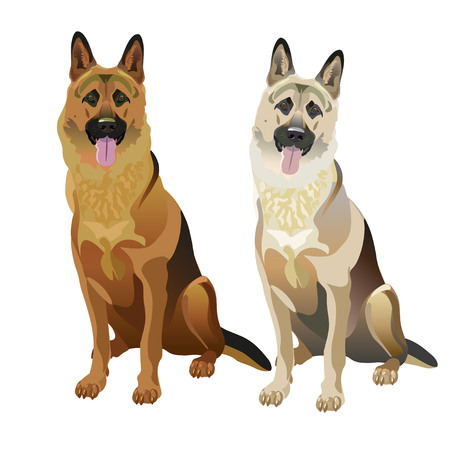 East european and german shepherd dogs. Vector illustration