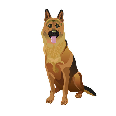 German shepherd dog sitting in front of a white background. Vector illustration