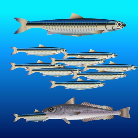 Set di pesci: concetto con acciughe e nasello. Illustrazione vettoriale