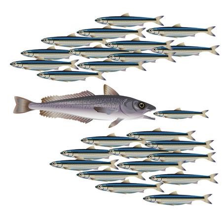 Predatory fish preying on a smaller fish. Vector illustration
