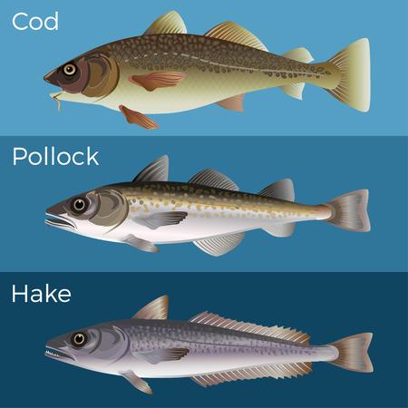 Set pesce: cod, pollock e nasello. Illustrazione vettoriale