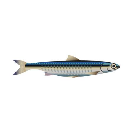Ansjovis vis. Vector illustratie op de witte achtergrond