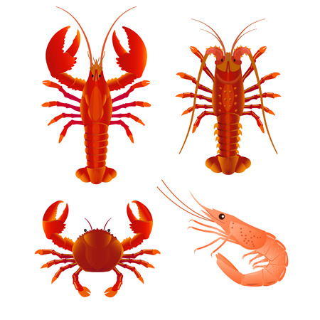 Set of seafood with crab, lobster, shrimp and spiny lobster. Vector illustration isolated on the white background