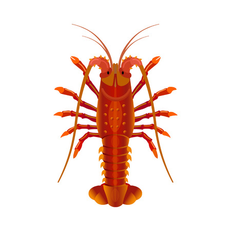 Rock spiny lobster isolated on white background. Vector illustration