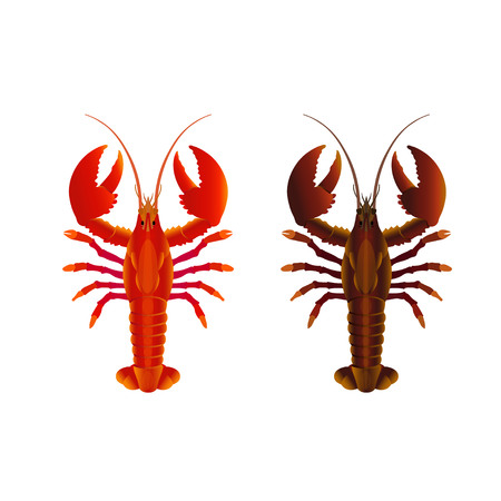 Raw and cooked lobsters. Vector illustration isolated on the white background