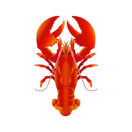 Boiled lobster. Vector illustration isolated on the white background Çizim