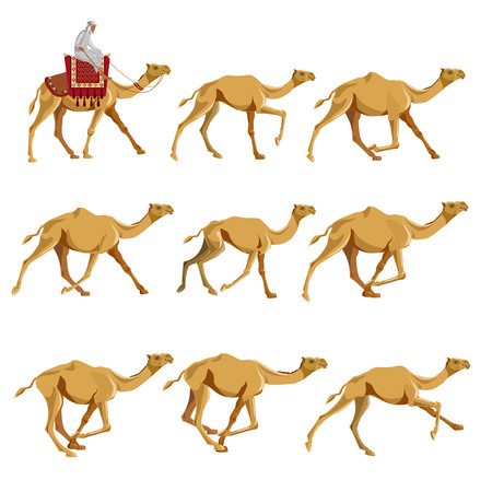 Set of vector illustrations with camels. Walking, galloping camels.