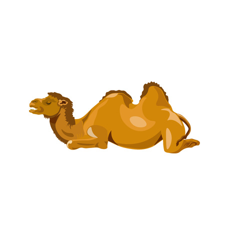 Bactrian camel lay down. Vector illustration isolated on the white background