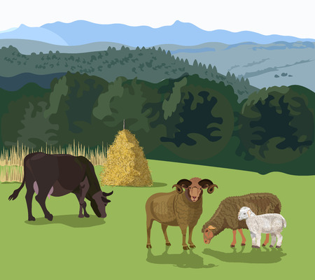 Cattle grazing in a meadow. Sheep and cow on pasture. Vector illustration