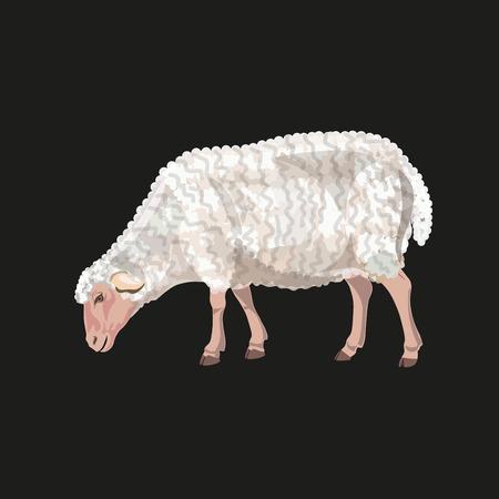 Sheep grazing on black background. Vector illustration Illustration