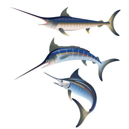 Set of marlin fishing. Vector illustration isolated on the white background Stock Illustratie