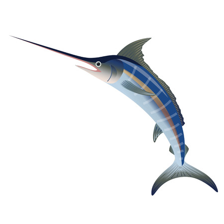 Blue marlin jumping. Vector illustration isolated on the white background