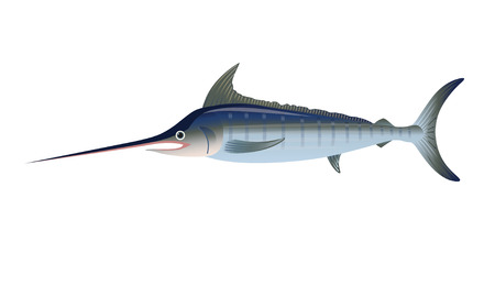 Atlantic blue marlin. Vector illustration isolated on the white background