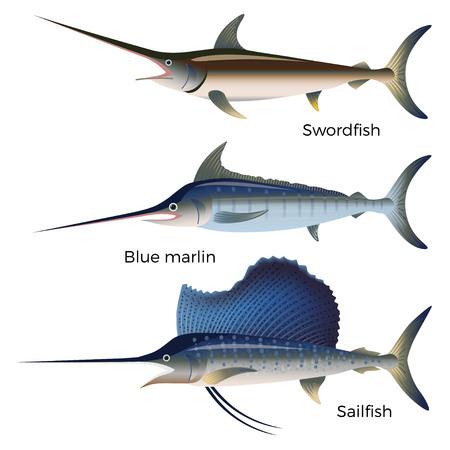 Conjunto de marlines: pez espada, aguja azul y pez vela. Ilustración de vector aislado en el fondo blanco