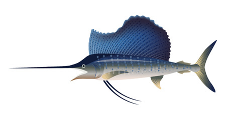 Sailfish. Vector illustration isolated on the white background Vettoriali