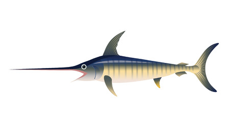 Blue marlin. Vector illustration isolated on the white background Illustration