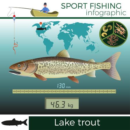 Lake trout infographic, sport fishing, vector illustration.  イラスト・ベクター素材