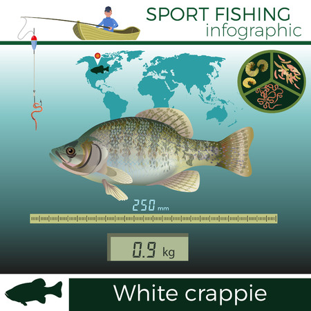 White crappie infographic, sport fishing, vector illustration.