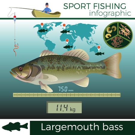 Largemouth bass infographic, sport fishing, vector illustration.