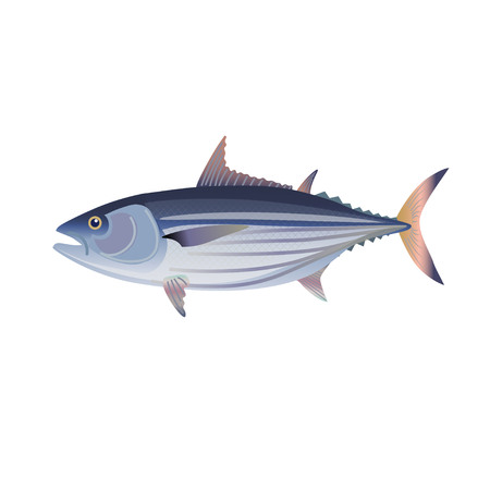 Skipjack tuna. Vector illustration isolated on the white background
