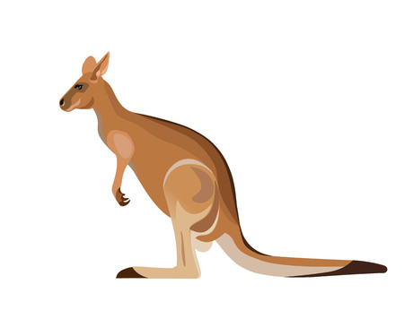 Red kangaroo on white background. Vector illustration