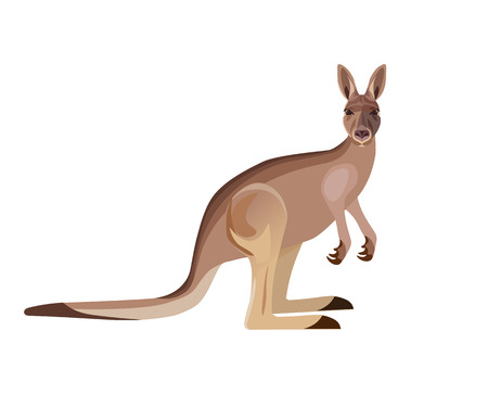 Grey kangaroo on white background. Vector illustration